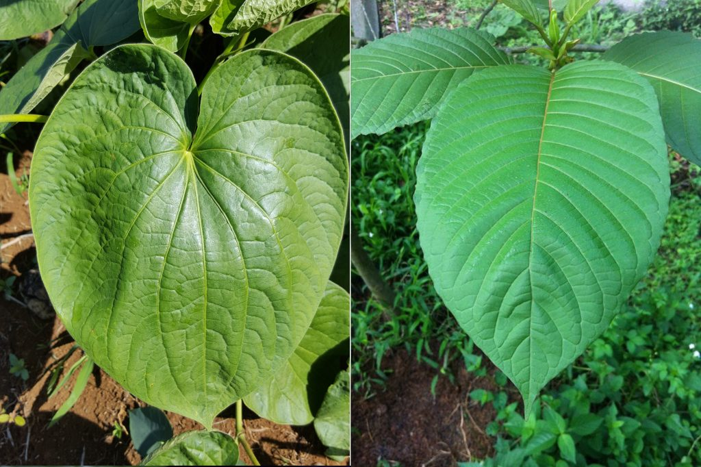 The Reality Concerning Finest Kratom In 8 Little Words